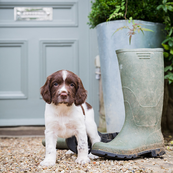 The perfect properties to bring your pooch!