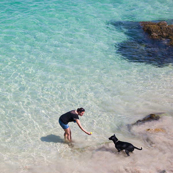 Dog Friendly St Ives