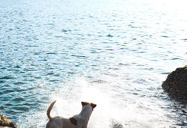 Wild Swimming Photo 4