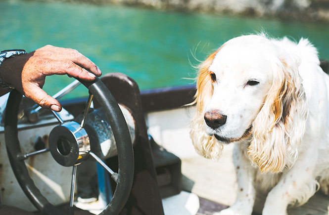 Dog-friendly days out in Newquay