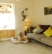 Making your holiday cottage dog-friendly…