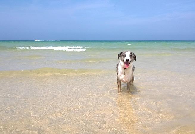 Porthkidney Sands dog walking