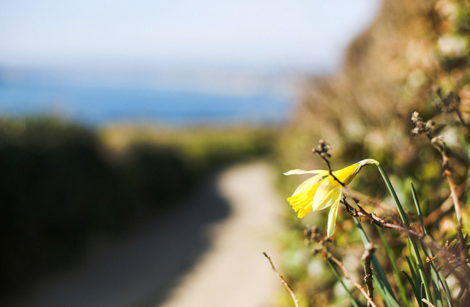 spring-in-Cornwall