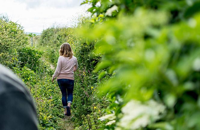 cornish hedgerow