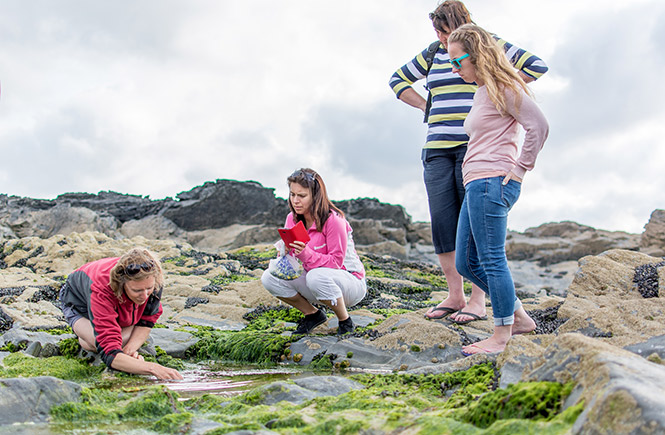 foraging in rockpools