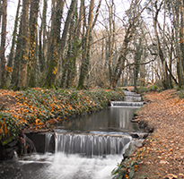 A walk through Tehidy Woods
