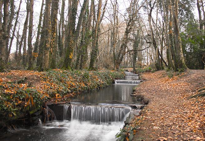 Tehidy woods waterfall
