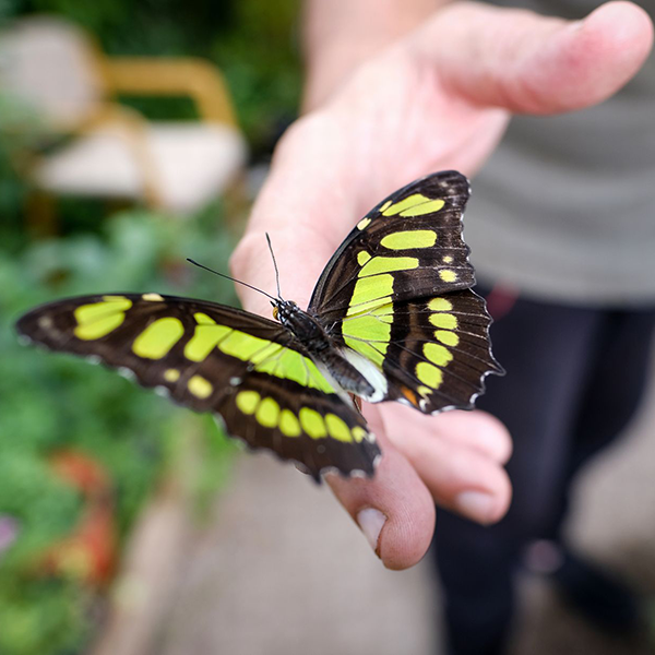 A visit to Guy's Butterfly House