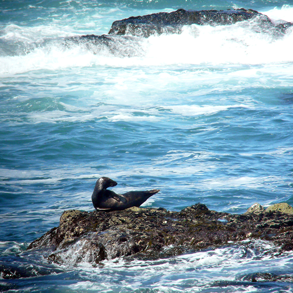 Seal spotting: our guide to 'watching seals well'