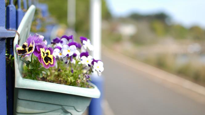 Lelant in Bloom