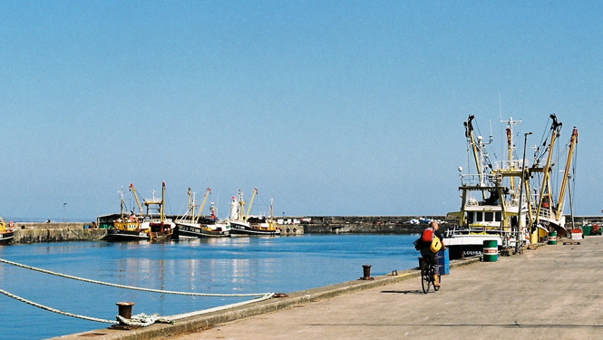Newlyn Working Harbour