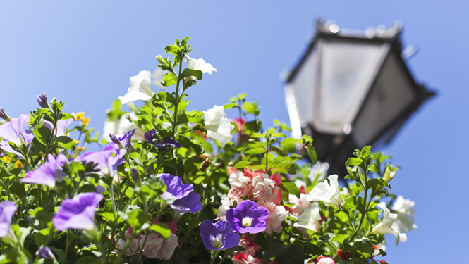 Flowers in Redruth Town centre