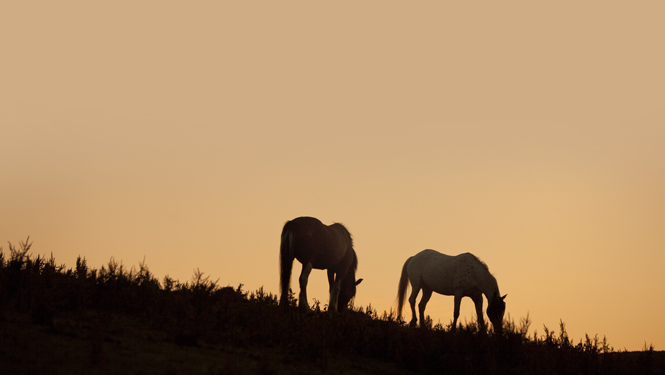 Sunset and horses, St Ives