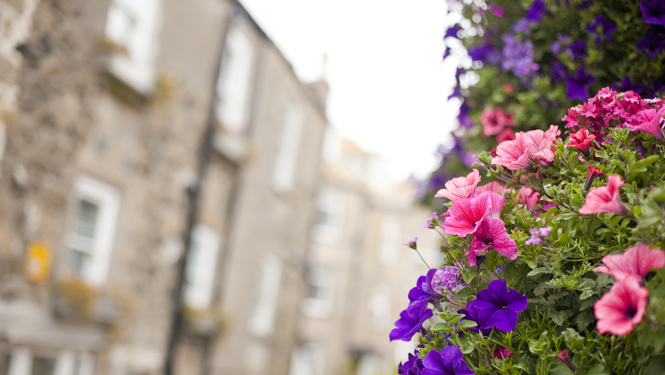 St Ives in Bloom