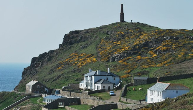 Beautiful gorse in flower on the headland at Cape Cornwall